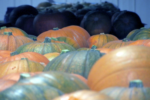 Pumpkins on a conveyor belt